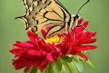 Butterflies / by Craig Norton
