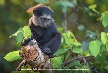 Animais de Angola