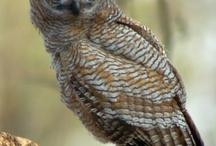 Birds: Owls, Raptors