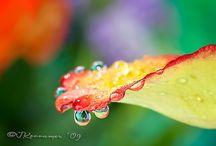 Water Drops / by Maureen Locke
