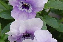 ÇİÇEKLER-2 (FLOWERS-2)