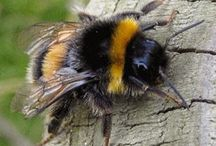 Bumble Bee Cottage