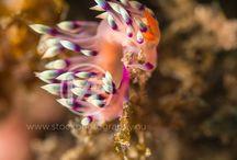 Underwater / Underwater (wild)life