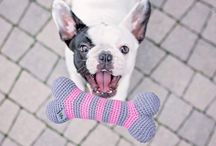 Crochet organic dog toys by LILLY PET SHOP / Handmade organic cotton dog and cat toys