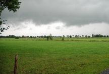 Regenzeit 08 | 2011 / Auch im Jader-Dschungel hat nun die Regenzeit begonnen. Selbst der kleinste Wassertropfen zieht in den Pfützen große Kreise.