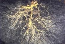 Microlife | Mikrobiologi