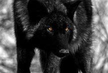 WOLFS / by Carolyn Murray