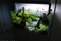 aquarium <3