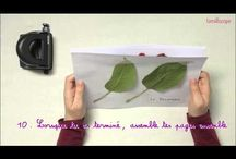 Homeschooling - Science de la nature