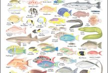 Fish identification / Fish Id
