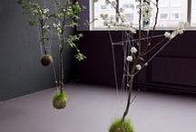 vertical gardensd