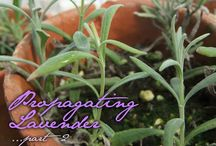 Everything about herbs / How to grow from seed, how to make the best out of herbs