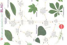 Lijn 3: thema boom / by Klas van juf Linda