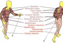 L'esercizio fisico / Azione