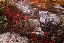 ✨ Autumn landscape ✨