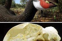 Dinoszauruszok /  Dinoszauruszos tárgyak  vagy maguk a dinók  <3