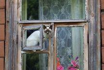 okna,dveře