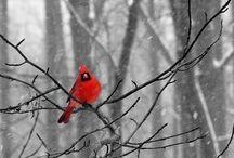Red / by Rhianna Bailey