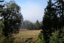 California Campgrounds