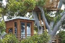 Tree houses and Unusual Homes