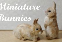 tutorials: pet shop (rabbits & rodents) / Tutorials for miniature rabbits, rodents, and ferrets