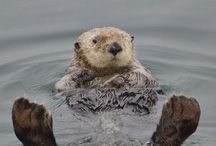 Otters / Anything Ottery