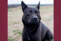 Black Dogs Are Special / These are black dog who have been adopted or are still waiting for their forever home.