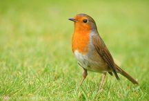 vogels kleur