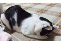 gatti dormono