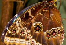 Butterfly /Schmetterling / Kelebek / .Please Like and Pin ! Thank you