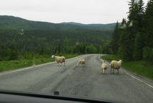 Norge  - bilder av Olga Sæteren