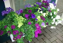 container gardening / by Pam M.