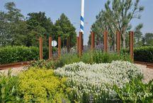 Rotondes / Wij beplanten en onderhouden ook diverse rotondes in de omgeving Haarlemmermeer