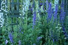Happy Gardening Ideas