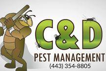 Pest Control Services Riviera Beach MD (443) 354-8805
