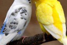 Birds / Lintuja ja pöllöjä