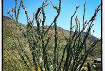 Desert Landscape / by Allison Cahill Scottsdale Luxury Properties