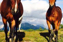 Cavallini carini