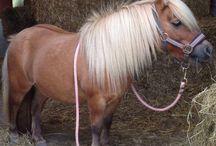 pony, s / paarden