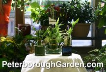 Lucky Bamboo / Drop by 443 George Street North to see our huge collection of Lucky Bamboo!