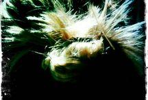 Hair / we love