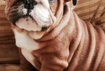 puppies / by Emily Grammar
