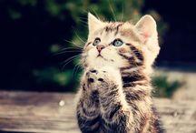 Stray Cat Strut / by Breanna Sundet