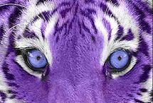 Purple - Beauty