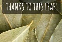 bay leaf health