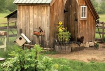 Chicken Coops / by Reformation Acres