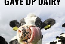 Vegan Means No Dairy