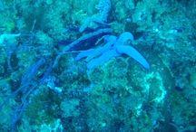 Scuba Diving / The underwater world