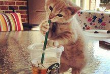 drinks ♥♡♥