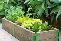 Growing a Garden & Planting Plants | Outdoor Living / by Juli-Anne Canterbury